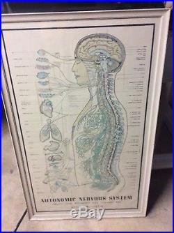 Large Chiropractor Neuropatholator Visual AUTONOMIC NERVOUS SYSTEM 1957 vtg