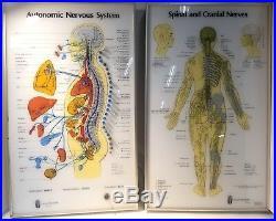 VTG Chiropractor Neuropatholator Visual Odyssey AUTONOMIC NERVOUS SYSTEM Lighted