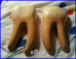 Vintage 1950's Composite Tooth Decay Dental Anatomical Model Anatomy 8 RARE