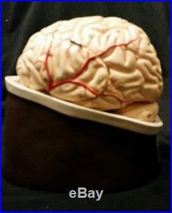 Vintage Medical Equipment » Blog Archive » Vintage Clay Adams Brain