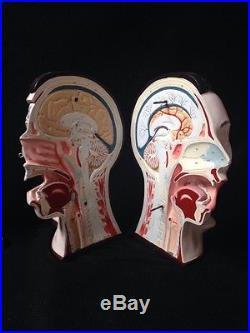 Vintage Denoyer Geppert Four-Part Bisected Head Anatomical Model A76