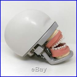 Vintage Dental Phantom Head Model, Jaw, Teeth, Spring Action, Rubber Gums C1