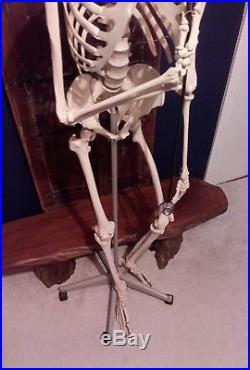 Vintage Human Medical Skeleton Anatomical Model Life Size