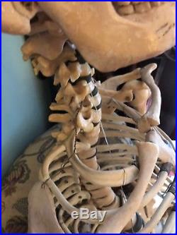 Vintage Human Skeleton Anatomical Model Life Size Model Medical Not Real