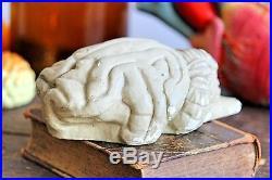 Vintage Medical Plastics Lab Anatomical Animal Brain Dog Brain Teaching Model